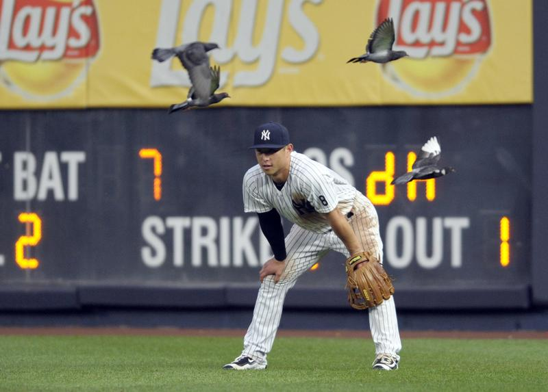New York Yankees right fielder Rob Refsnyder looks on as he is joined by pigeons during the eighth inning of a baseball game against the Tampa Bay Rays at Yankee Stadium.