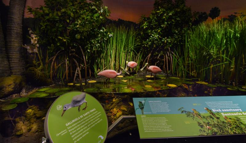 Zapata_wetlands_DFAmerican_Museum_of_Natural_History