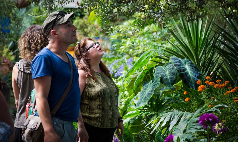 visitors to the new york botanical garden experience the sounds scents and feel of a mexico city garden in the glasshouse of the enid a haupt conservatory