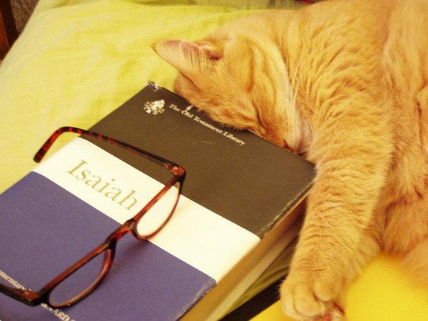 """Miss Paris reads for grad school"" by Christi Humphrey"