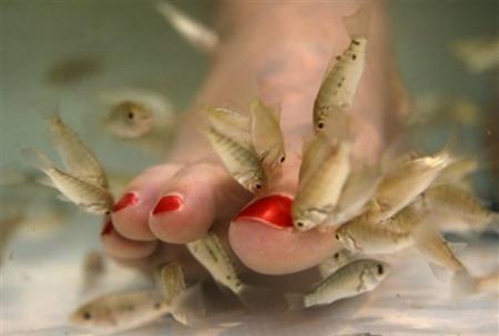 carp-pedicure